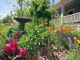 Merveilleux Backyard Habitat   Plants